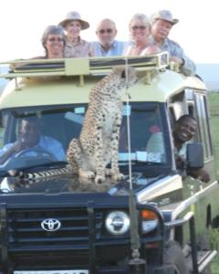Cheetah Masai Mara '06